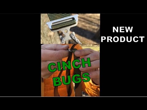 Cinch Bugs (Pair)-4722